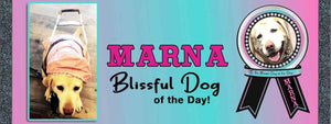 The Blissful Dog Of The Day - Marna
