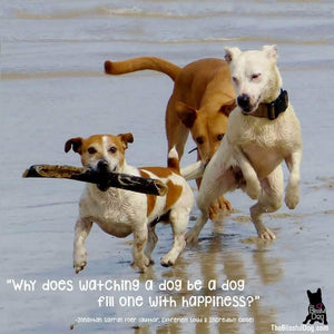 why does watching a dog be a dog fill one with happiness -jonathan Safran Foer