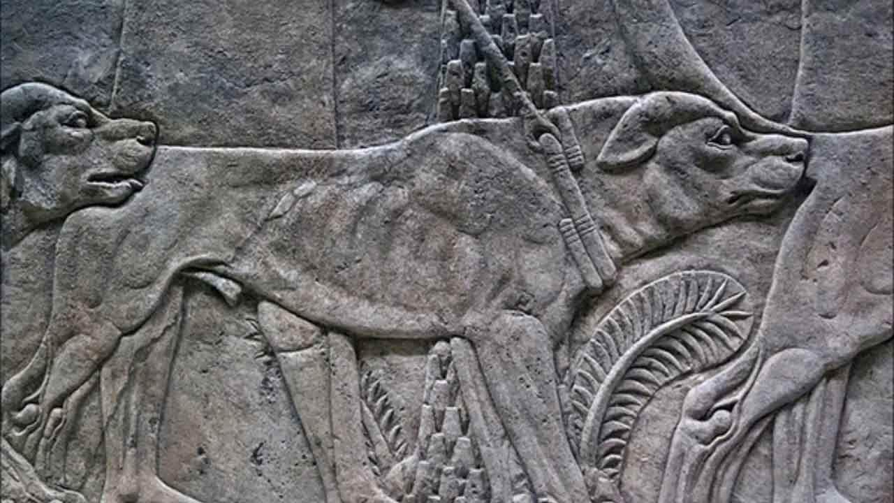 Alexander the Great's Dog, Peritas, Changed History By Biting an Elephant