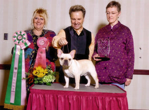 French Bulldog National Specialty Sweeps Judging Honor