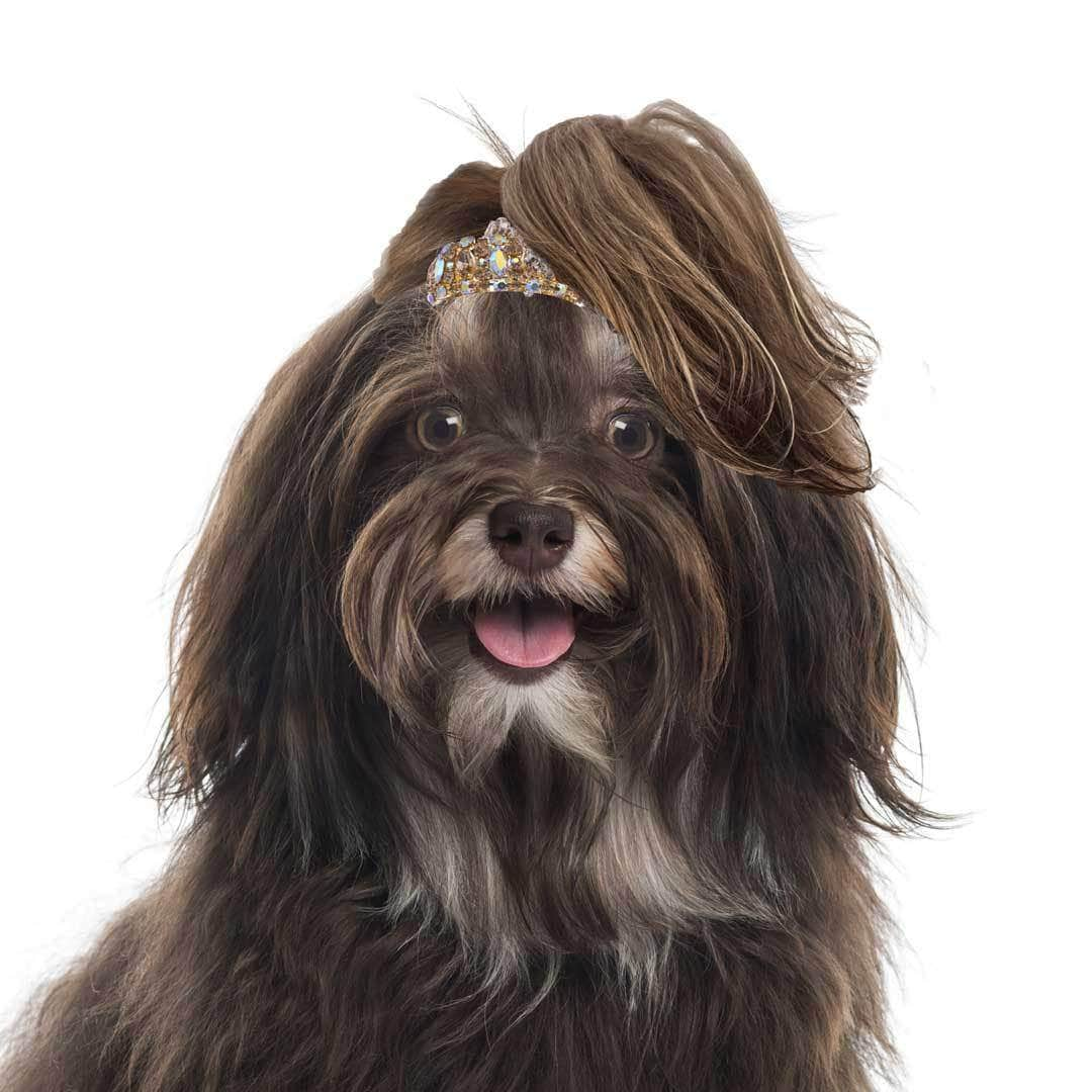 Havanese Collection