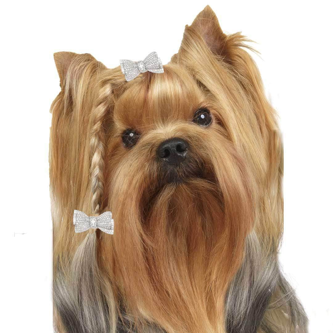 Yorkshire Terrier Collection