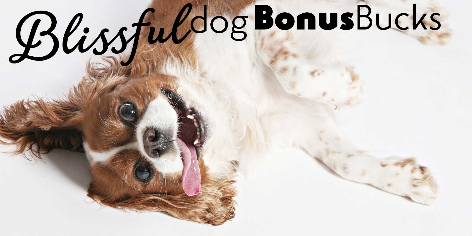 the blissful dog bonus bucks rewards
