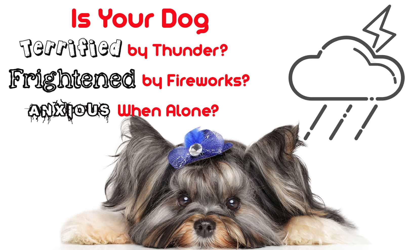 dog afraid thunder