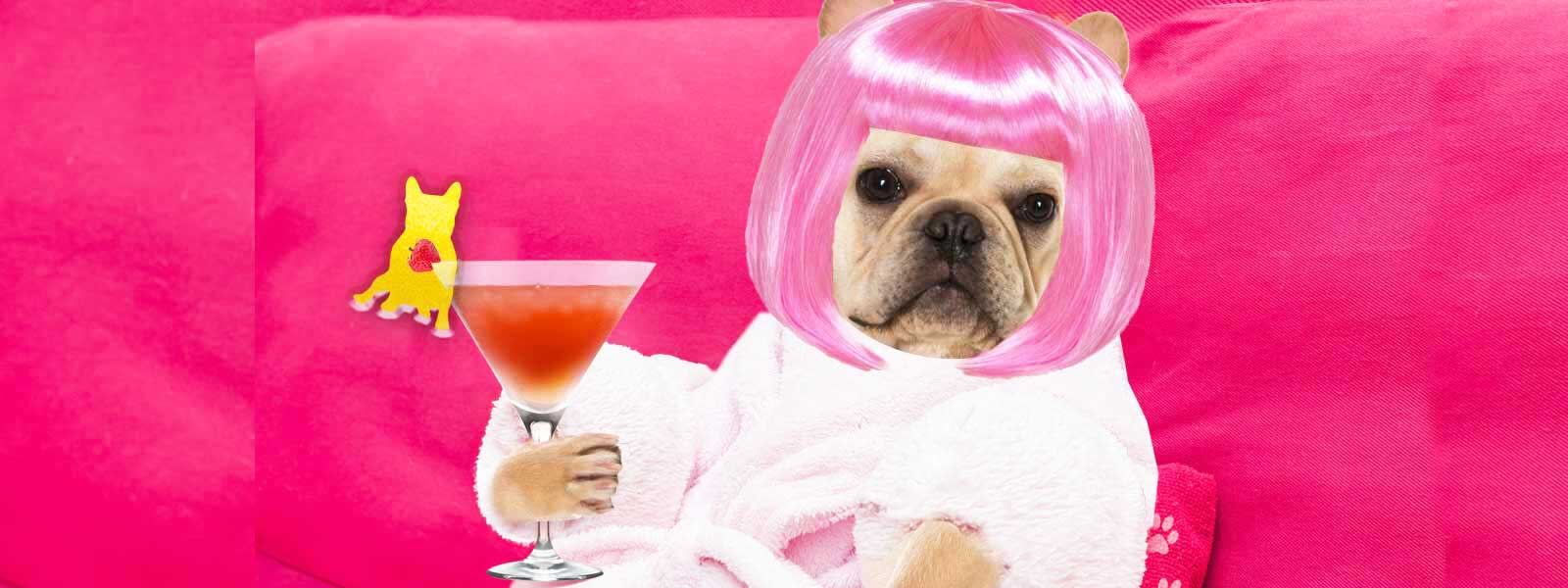 French Bulldog Spa Day