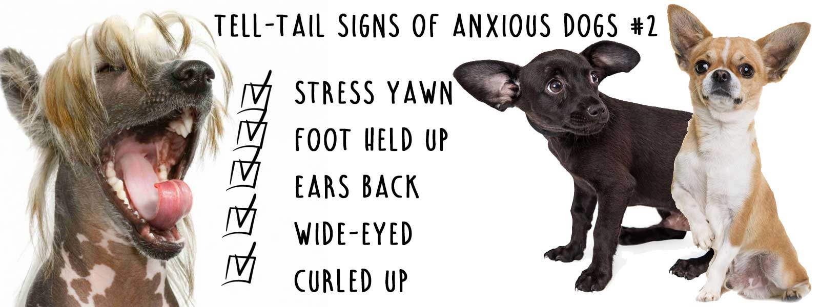 signs dog is anxious