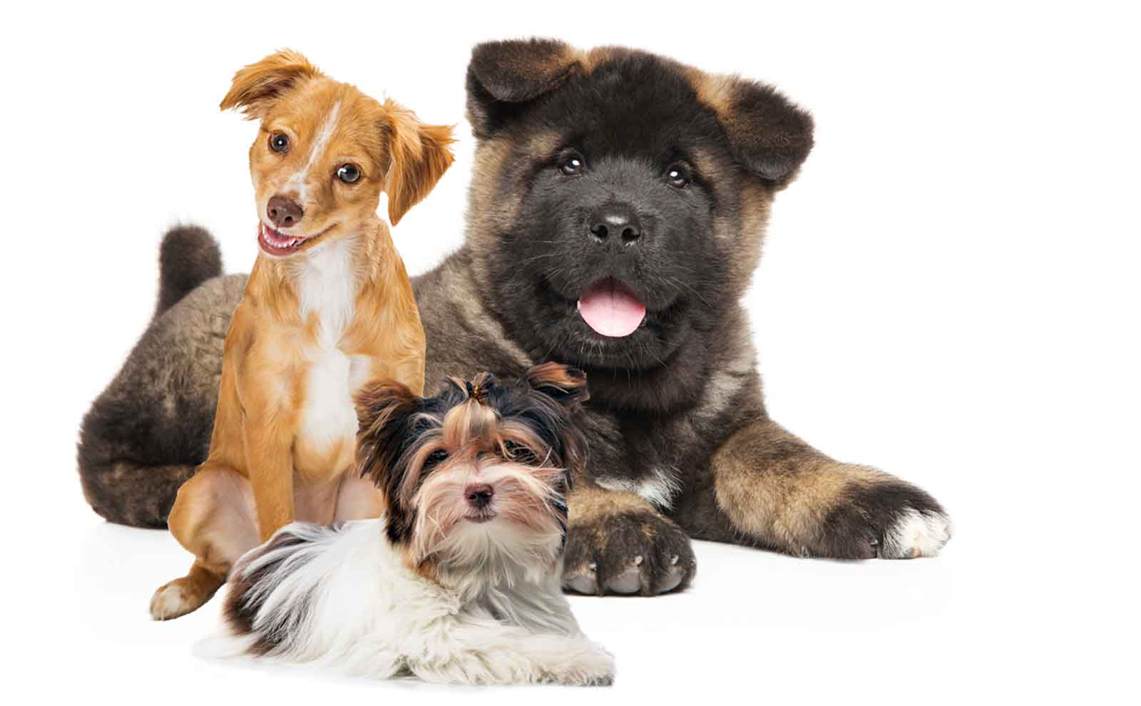 herbal balms for puppies