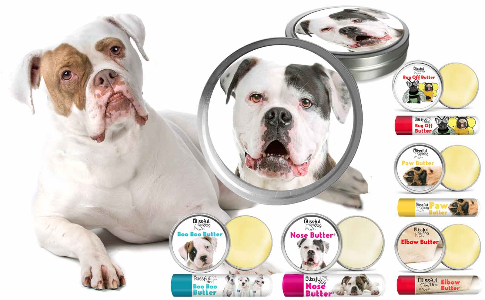american bulldog care