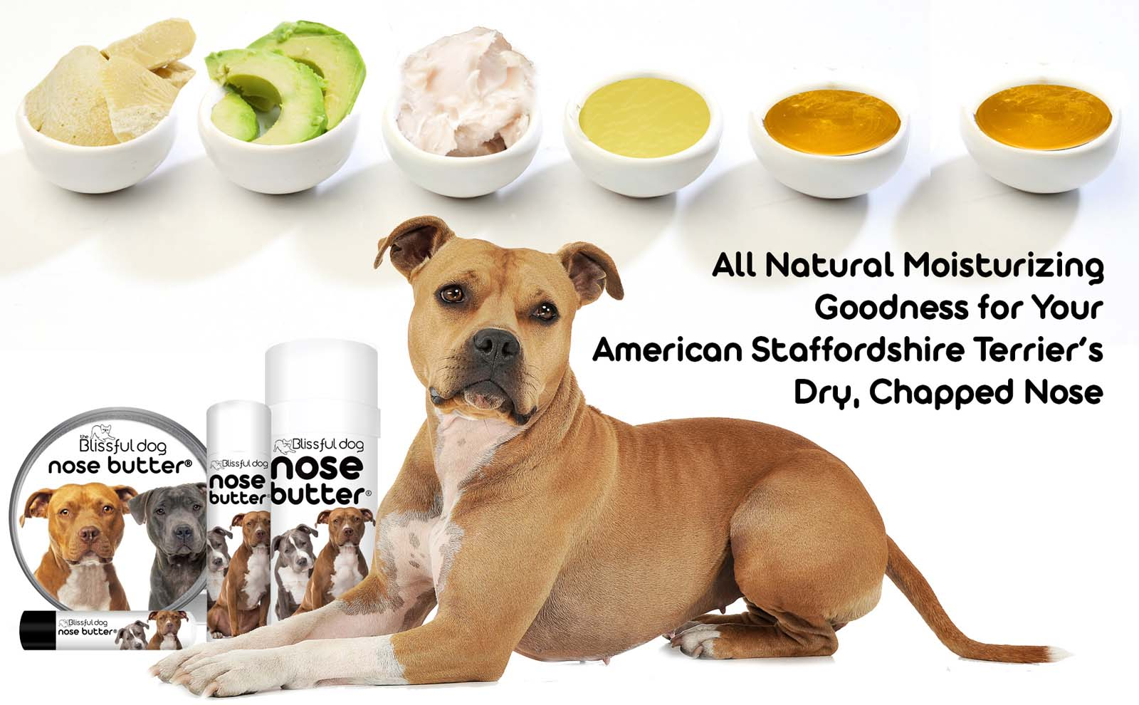 american staffordshire terrier dry nose