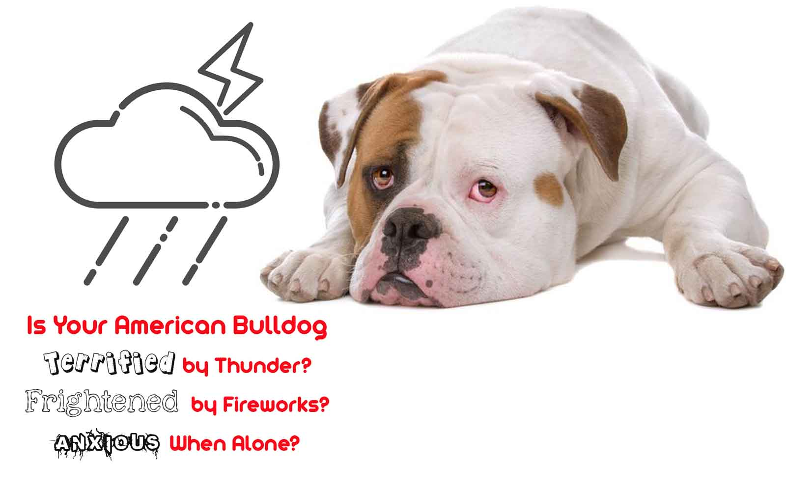 american bulldog calming spray