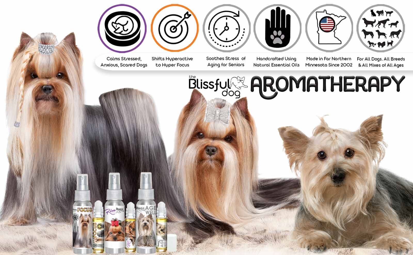 yorkshire terrier aromatherapy
