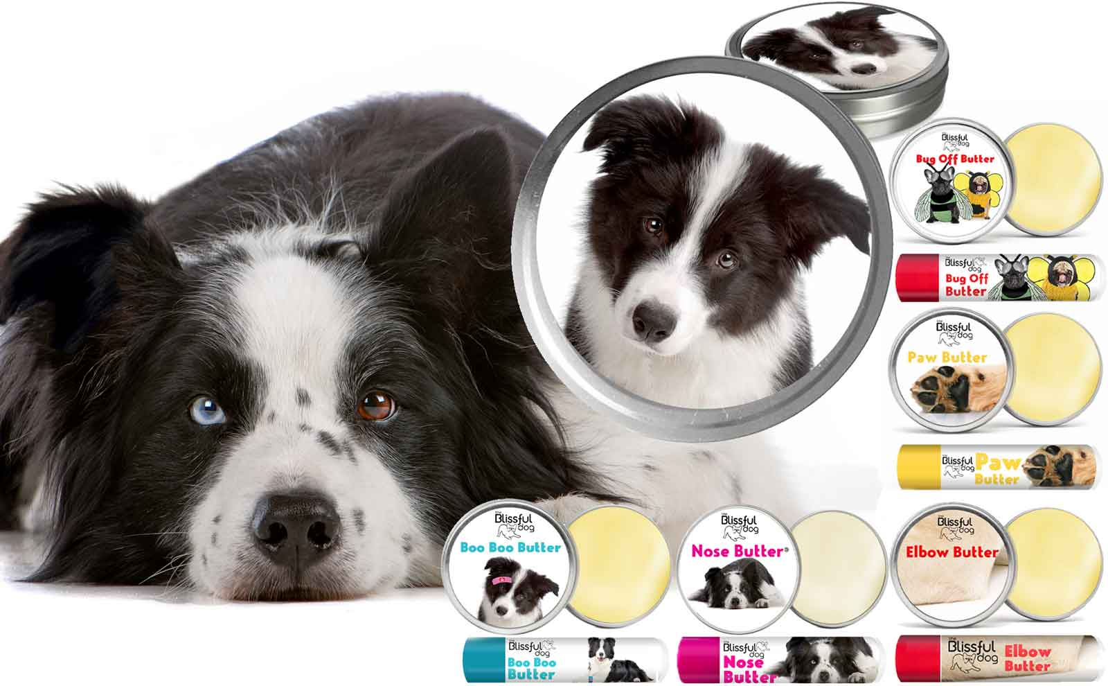 border collie skin care