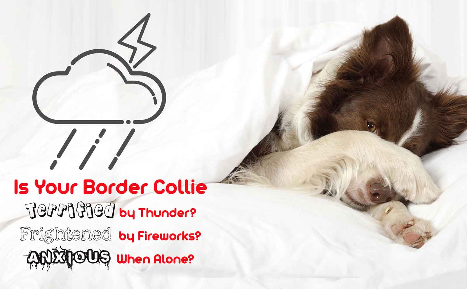 border collie anxiety