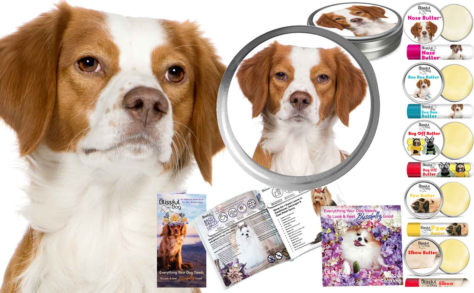brittany dog grooming