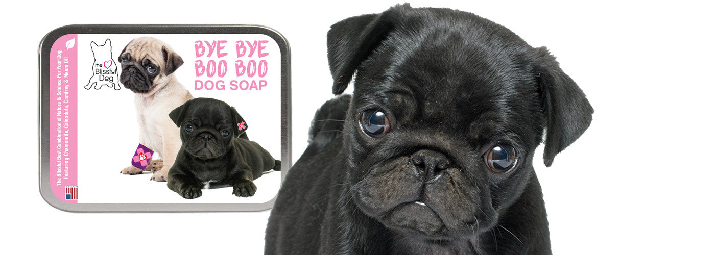 PUG SOAP FOR ITCHY SKIN