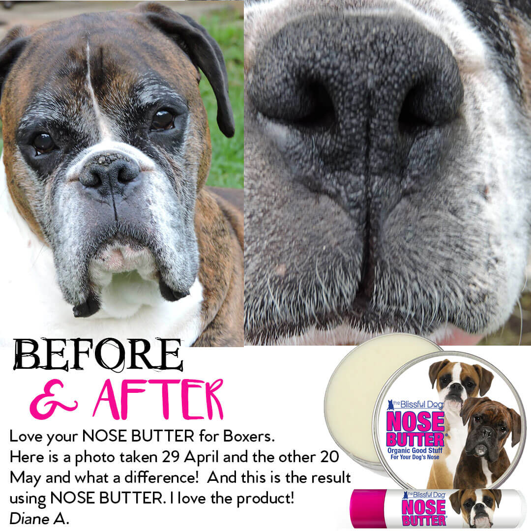 boxer dog before nose butter