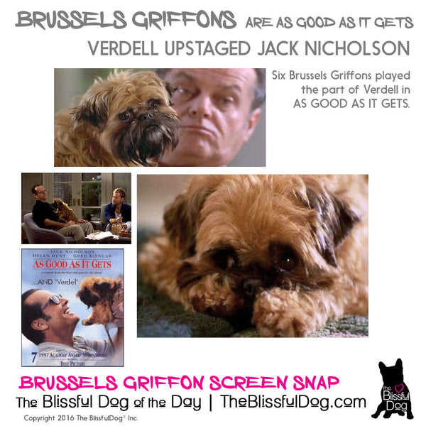 brussels griffon as good as it gets