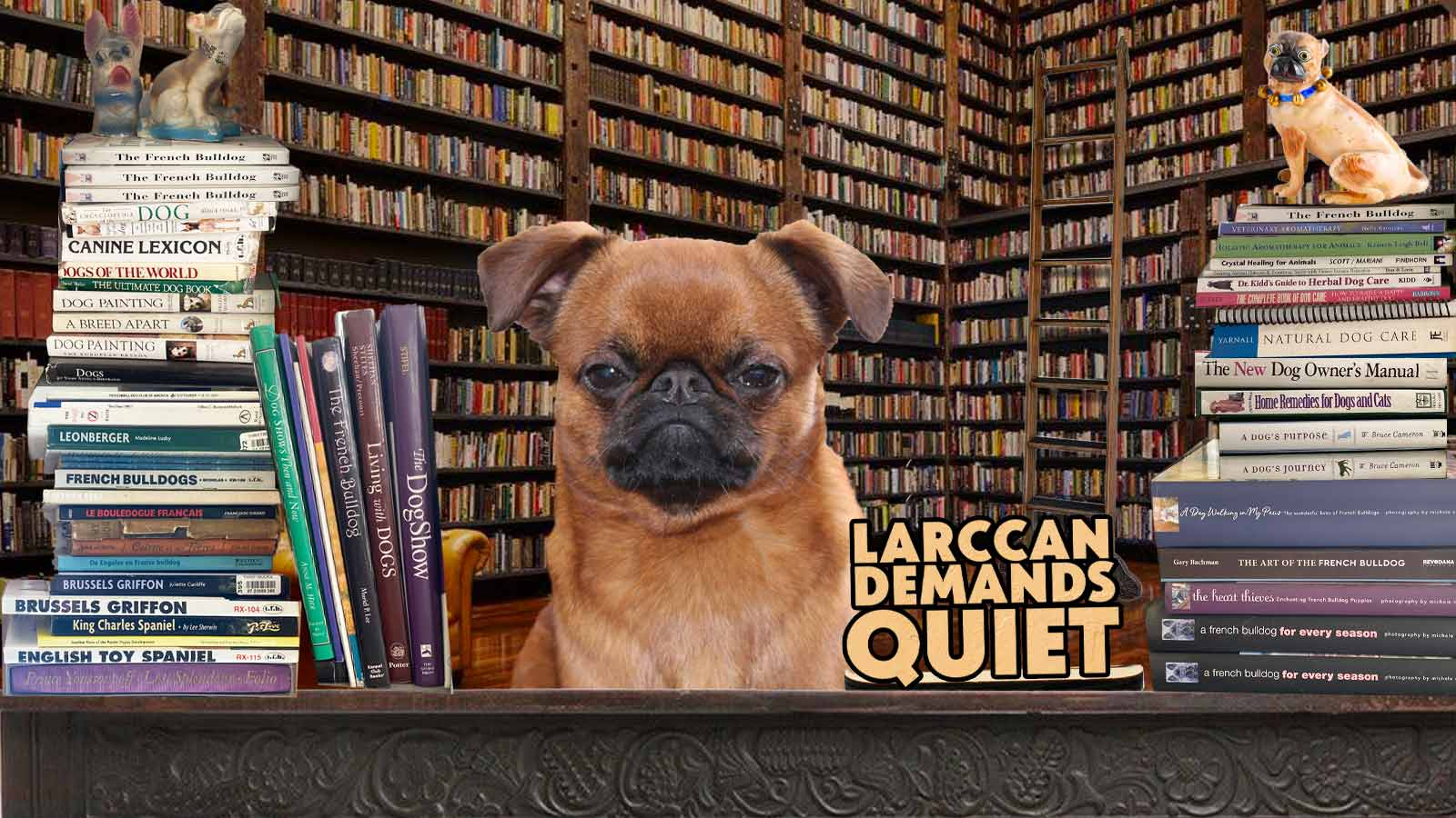 Smooth Brussels griffon library