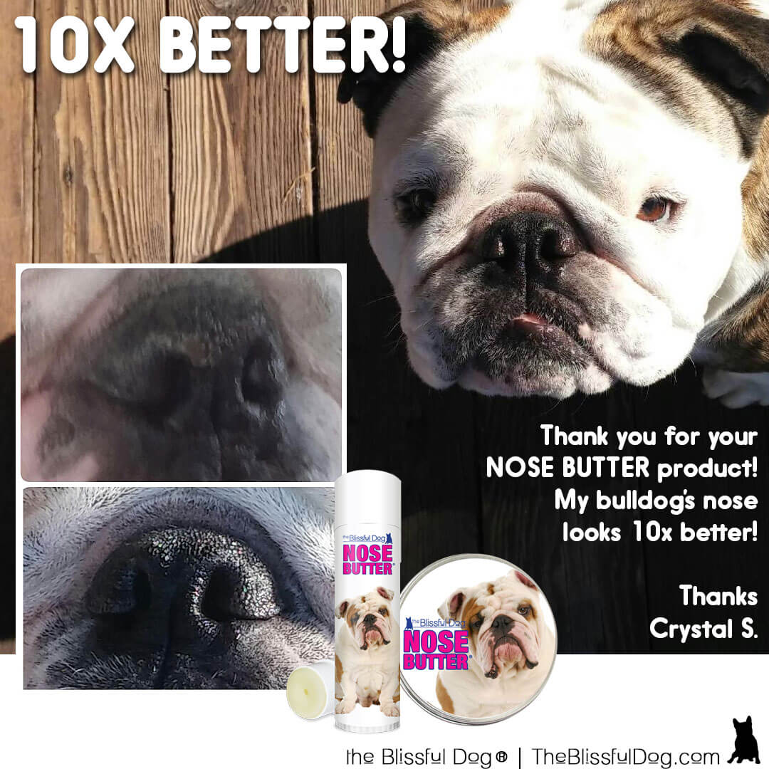 bulldog before after nose butter