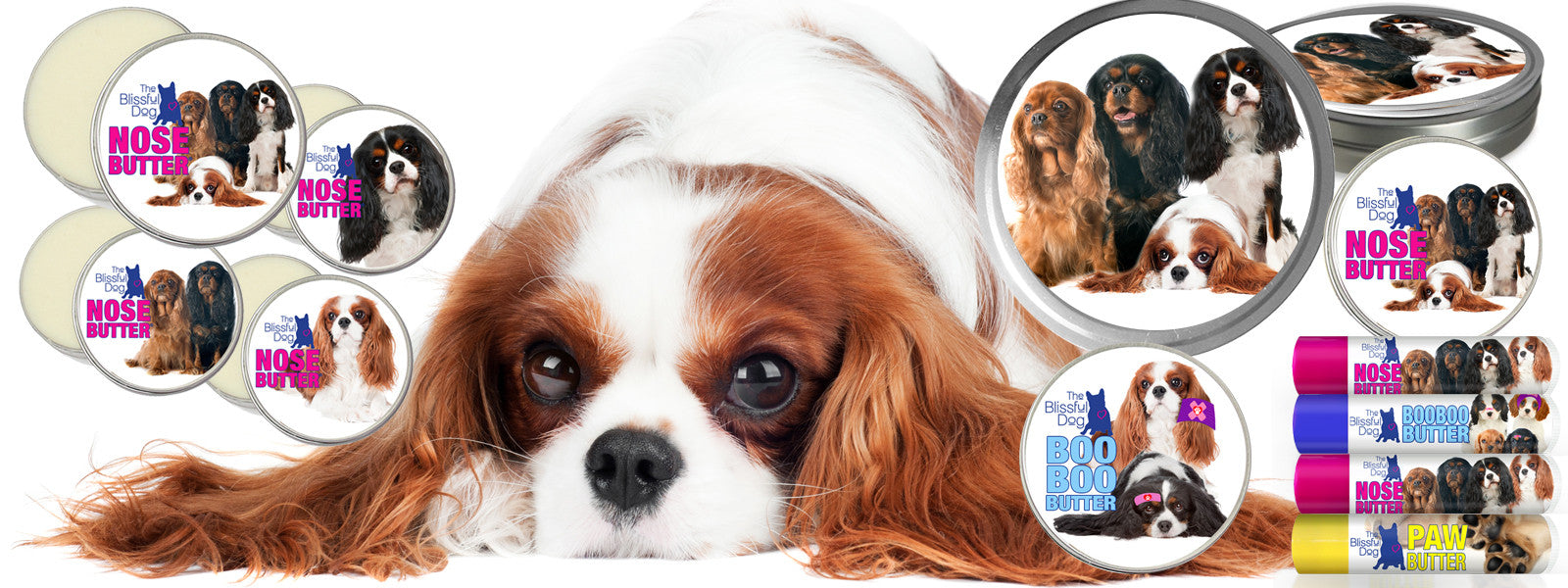 Cavalier King Charles spaniel color varieties
