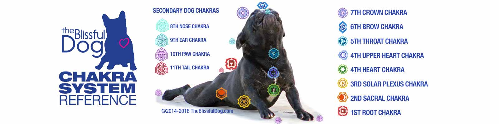Dog Chakra Healing | Holistic Healing for Dogs