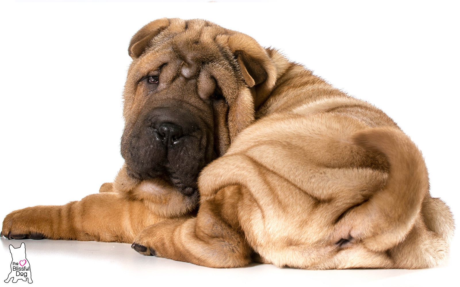 gentle touch dog soap bar chinese shar pei all natural. Black Bedroom Furniture Sets. Home Design Ideas
