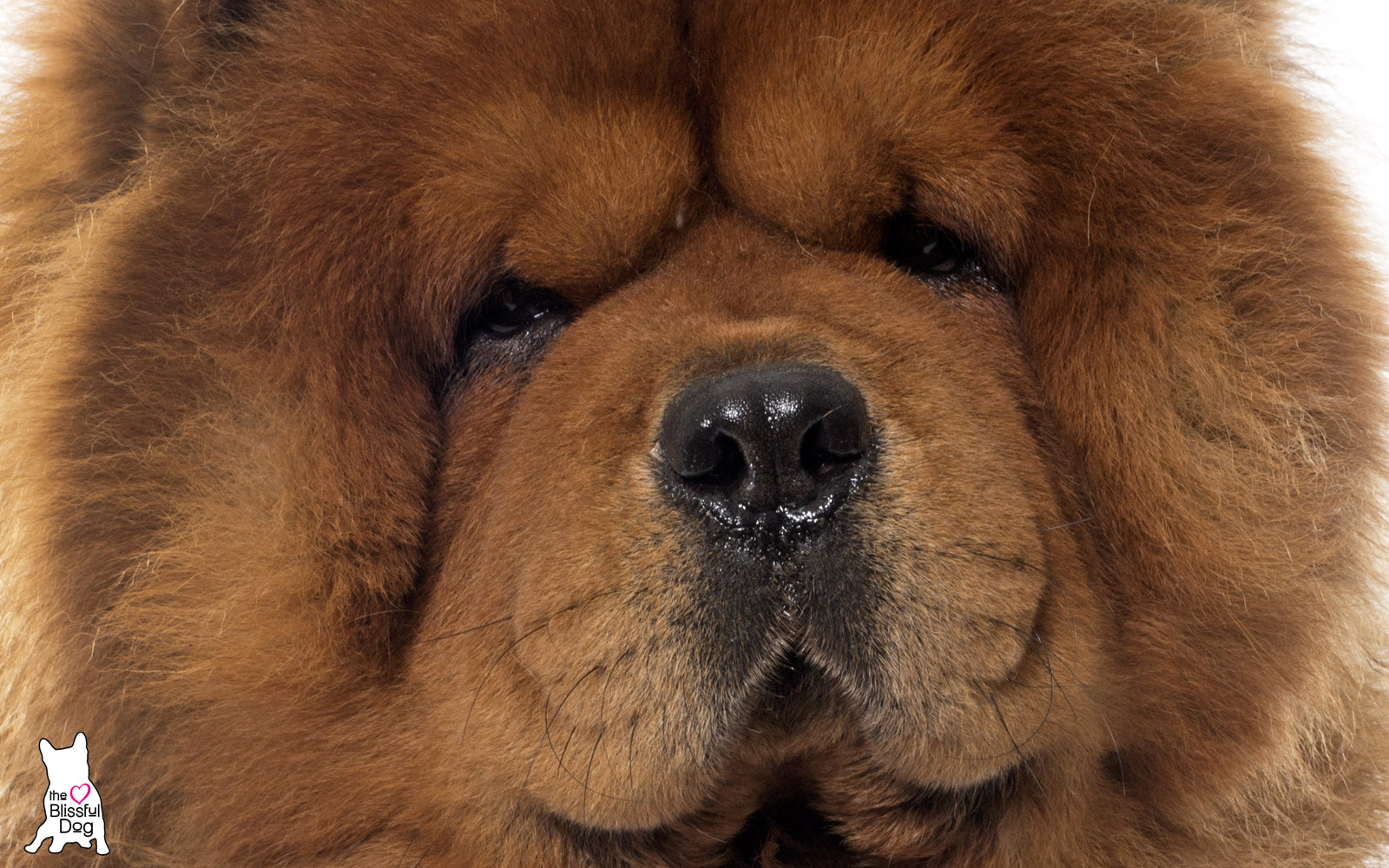 What Are The Oldest Pure Dog Breeds