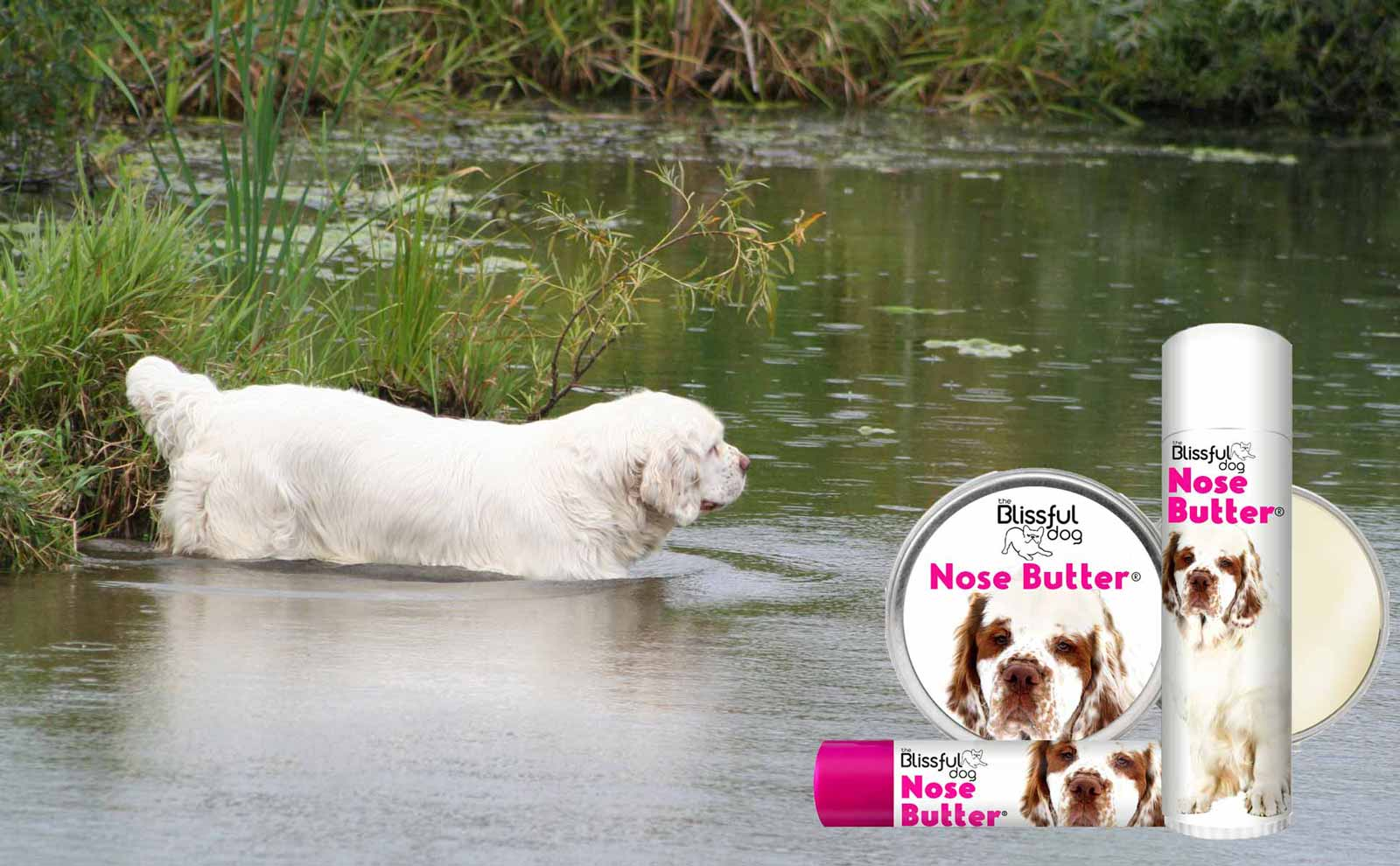 clumber spaniel in  lake