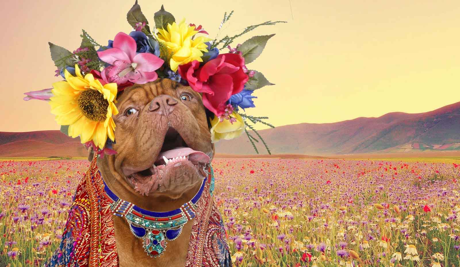 dogue de bordeaux flower crown