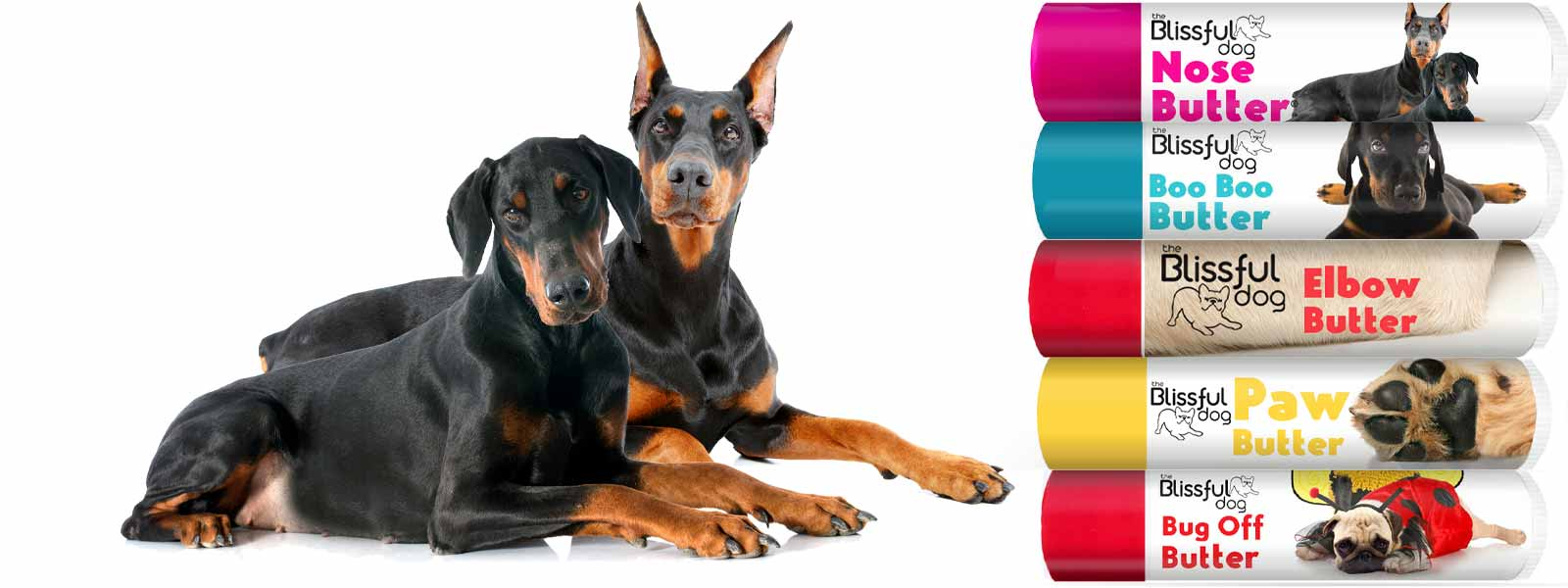 doberman pinscher skin care