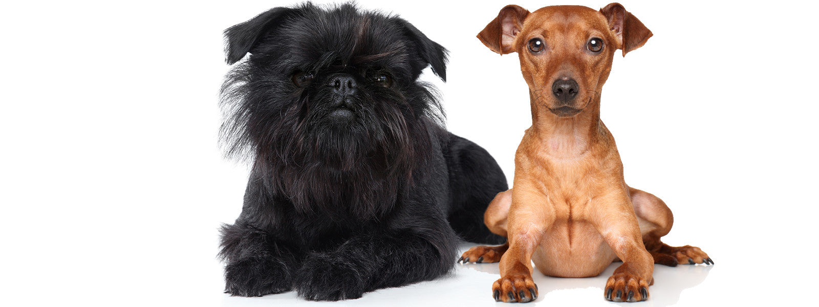 SO MANY DOG BREEDS   SO LITTLE TIME