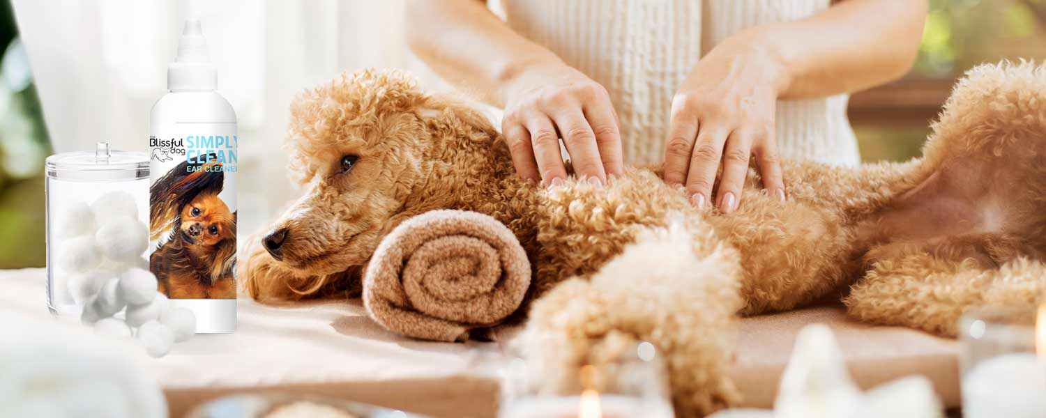 poodle dog spa