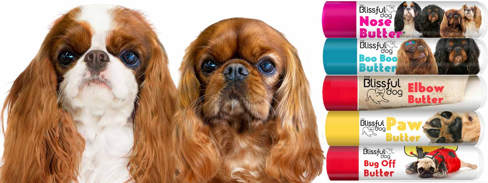 blenheim and ruby english toy spaniel