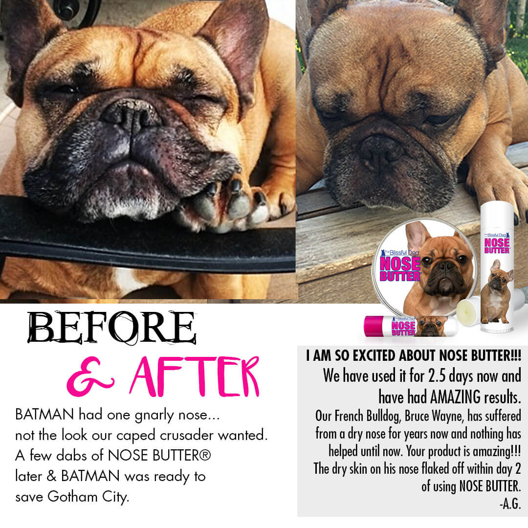 french bulldog before & after nose butter