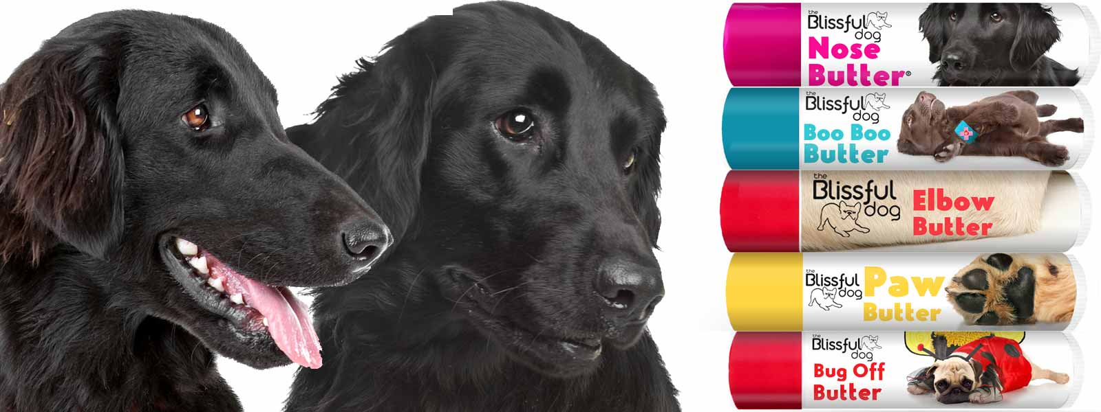 flat coated retriever care