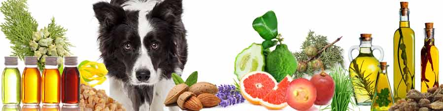 FOCUS DOG AROMATHERAPY INGREDIENTS