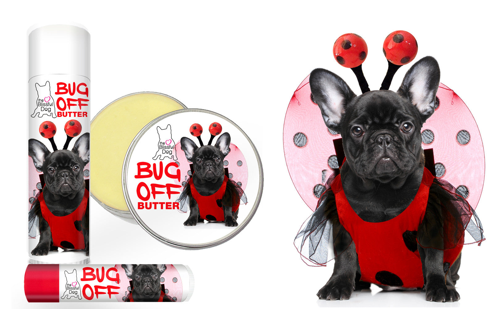 FRENCH BULLDOG INSECT