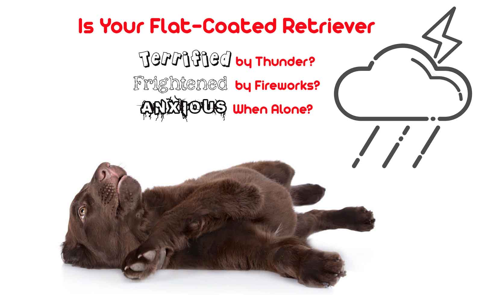 flat-coated retriever anxiety