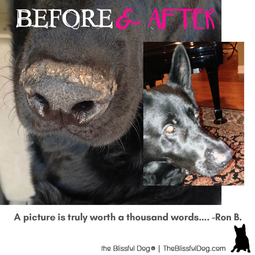 german shepherd before and after nose butter