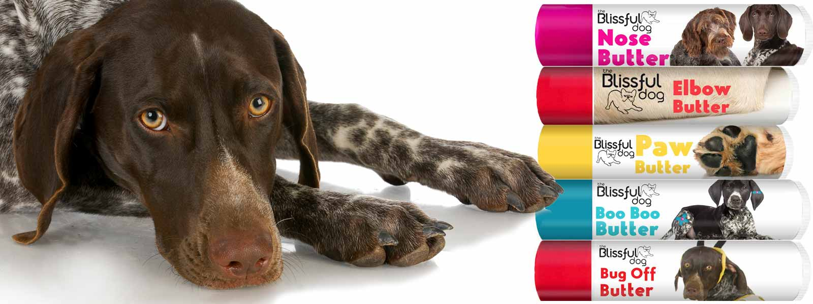 german shorthaired pointer skin care