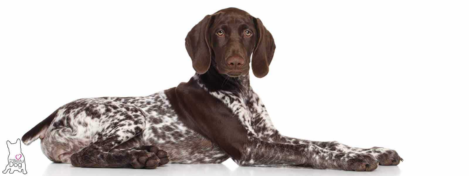 German Shorthaired Pointer Nose Butter® for Your GSP/GWP dry nose