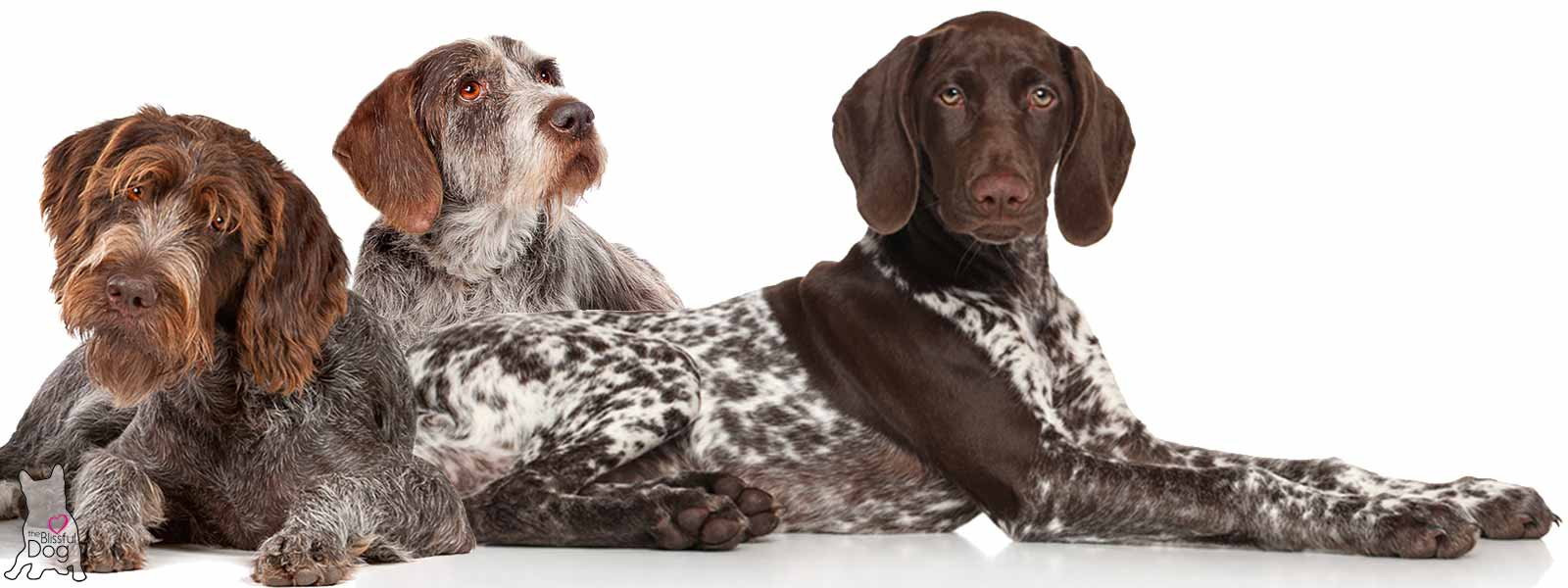 The Blissful Dog Shop Everything Blissfully German Shorthaired ...
