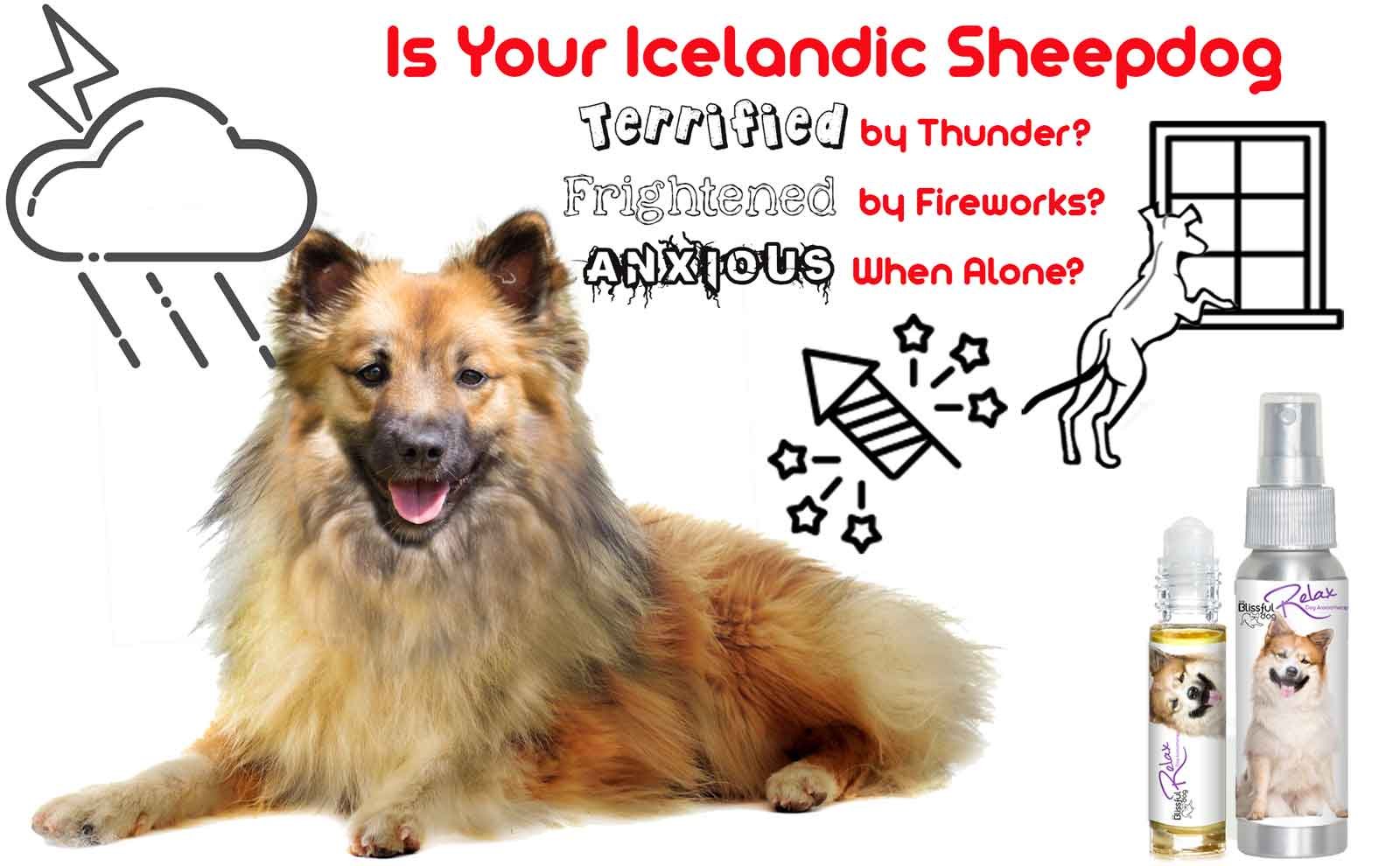Icelandic Sheepdog calming
