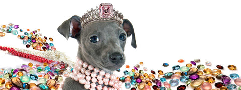 Italian Greyhound jewelry