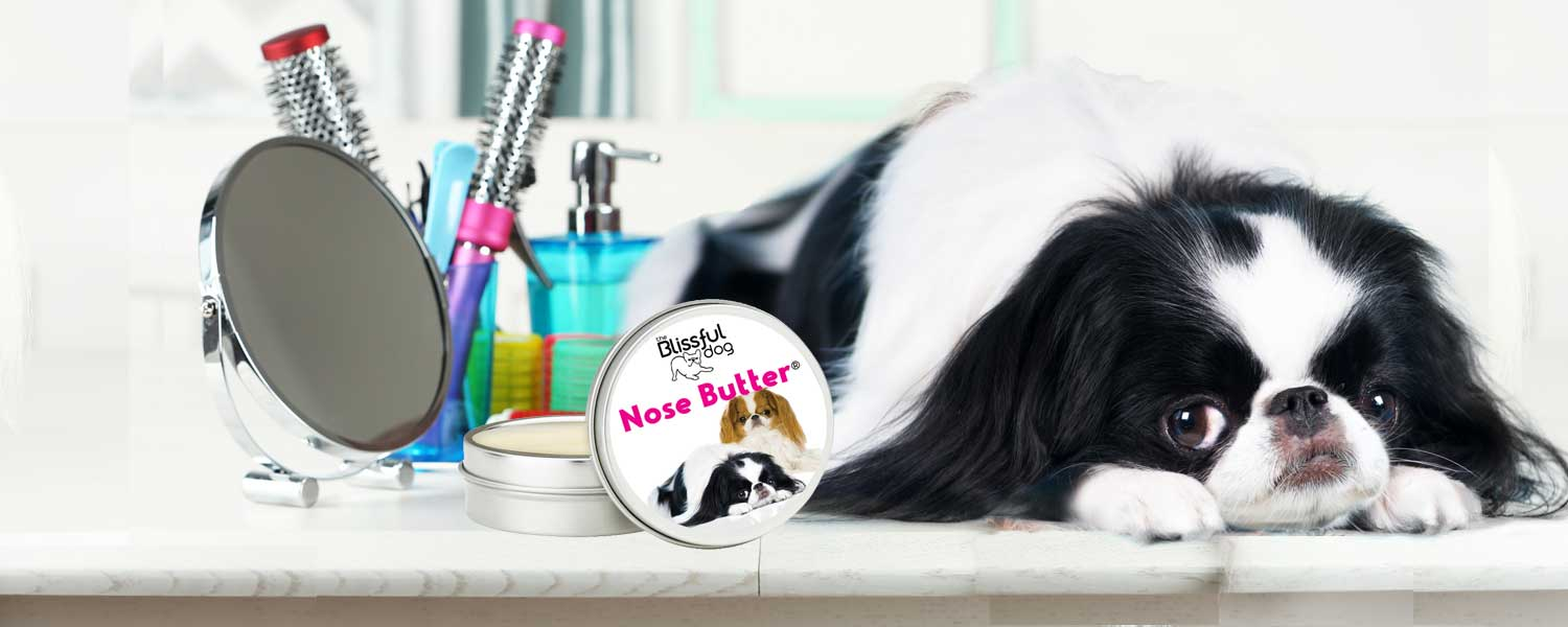 Japanese Chin Dog Spa