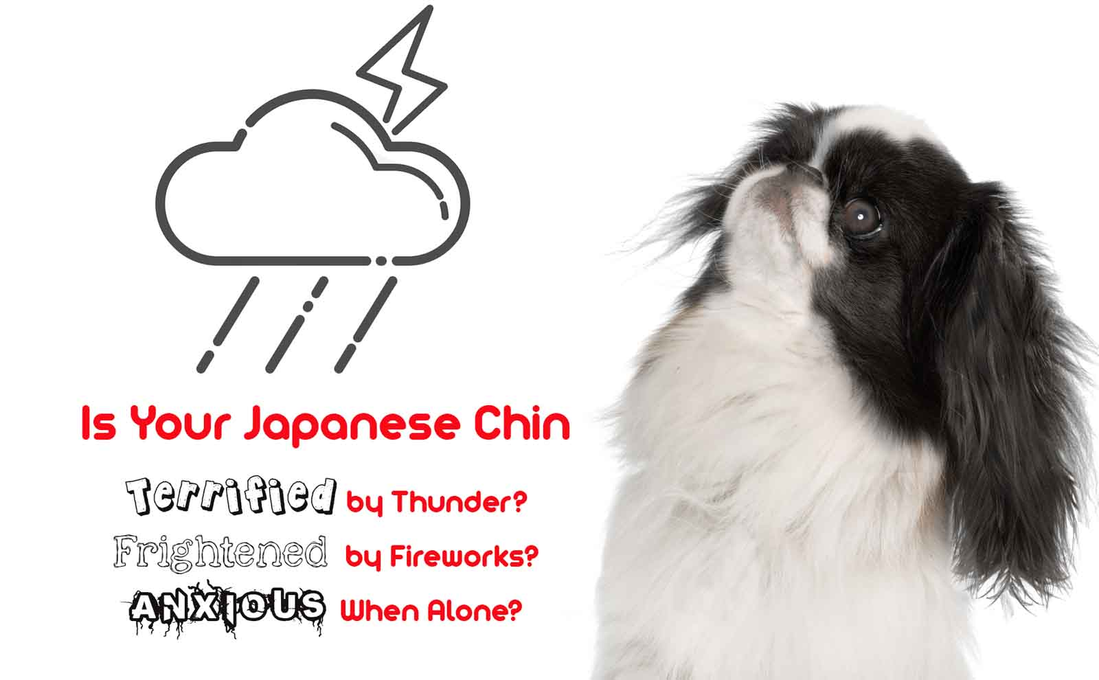 japanese chin anxiety