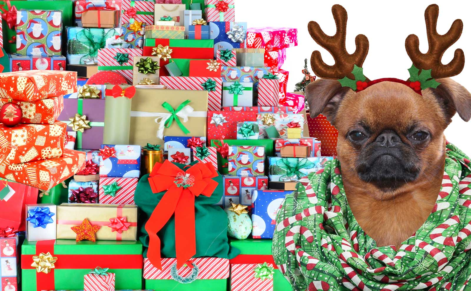 the blissful dog holiday gifts