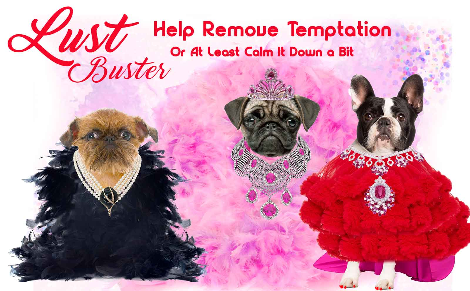 Dogs dressed in evening gowns