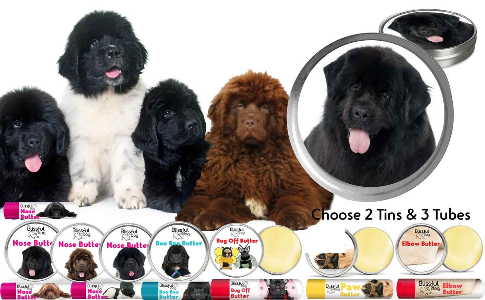 newfoundland dog care