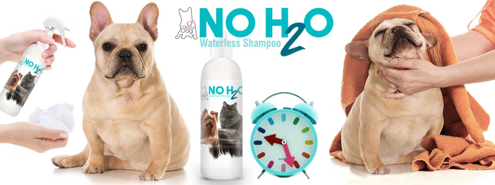 using no h20 waterless dog shampoo